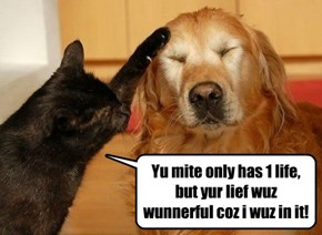 Teh feelings are mutual, aifinkso!