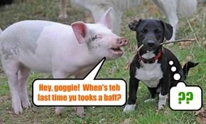 Hey, goggie..