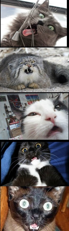 A Salute to Demented Cats.....
