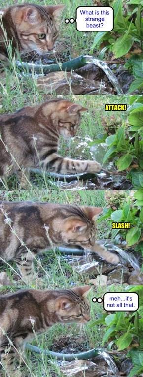 Stalking the deadly garden hose
