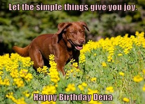 Let the simple things give you joy.  Happy Birthday Dena