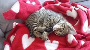 Yes Blanket, I Heart You