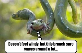 Lasik candidate Froggy  Hopps