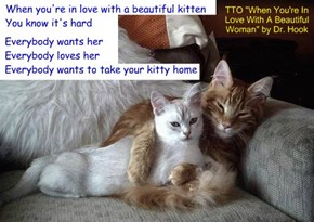 """When You're In Love With A Beautiful Kitten"" (TTO ""When You're In Love With A Beautiful Woman"" by Dr. Hook)"