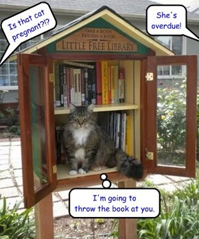 Little Free Library cat