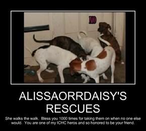 ALISSAORRDAISY'S RESCUES