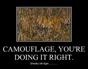 CAMOUFLAGE, YOU'RE DOING IT RIGHT.