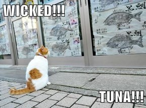 WICKED!!!  TUNA!!!