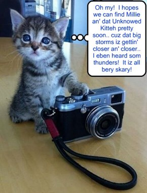 """Priscilla Pringle is snapping som photos to accompany her stories in the Skool Newspaper """"The Time Out Bawks"""" about teh Searches for Shyster Millie an' teh Unknown Kittie.."""
