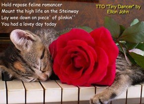 """Feline Romancer"" (TTO ""Tiny Dancer"" by Elton John)"