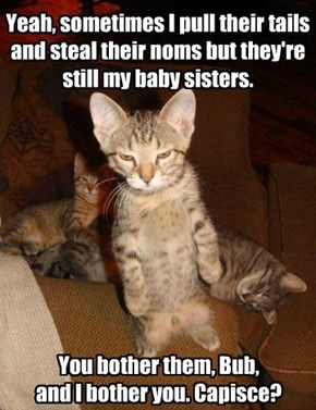 Now Put Down Your Little Catnip Toy And Back Off!