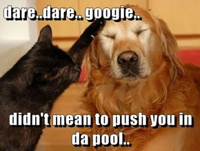 dare..dare.. googie..  didn't mean to push you in da pool..