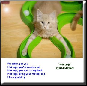"""""""Hot Legs"""" by Rod Stewart"""