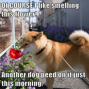 Wake Up and Smell the Dog Pee