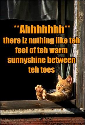 Sunnyshine