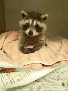 Ai Jus Wait Here Patiently fur Noms