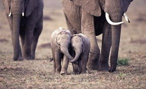 Holding Trunks