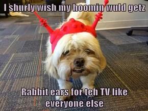 I shurly wish my hoomin wuld getz  Rabbit ears for teh TV like everyone else