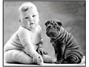 Dog or Baby—Which One is Right for You?