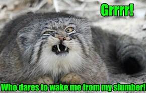 Grrrr!