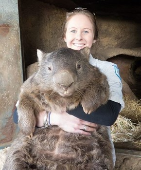Meet Patrick, The World's Oldest Wombat Virgin