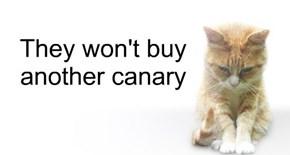 Dismayed Cat #11B