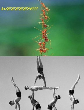 Ant Pyramid Luks Like Man Pyramid