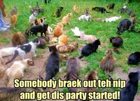 When cats go wild!