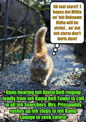 Once teh Alarm Bell rings out, all Kitties are alerted to return immediately to teh saftey ob teh Kamp!!