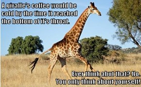 A giraffe's coffee would be                                                                               cold by the time it reached                                                               the bottom of it's throat.  Ever think abut that? No.