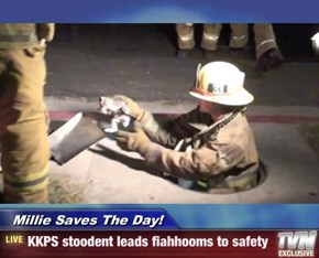 Millie Saves The Day! - KKPS stoodent leads fiahhooms to safety