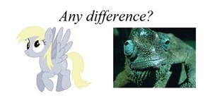 No difference between derpy and a chameleon