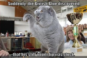 Suddenly, the British Blue discovered  that his stiff upper lip was stuck.