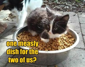 one measly dish for the two of us?