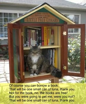 Of course you can borrow a book. That will be one small can of tuna, thank you. Not for the book, no, the books are free! But you were going to pet me, were you not? That will be one small can of tuna, thank you.