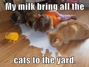 My milk bring all the   cats to the yard.