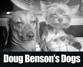 Benson's Vet dispenses medical marijuana...for dogs