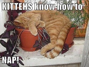 KITTEHS know how to  NAP!