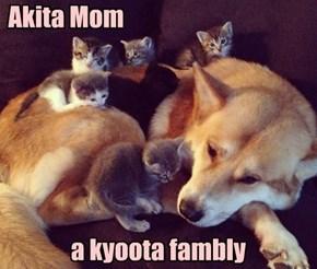 Akita Mom                    a kyoota fambly
