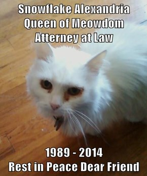 Snowflake Alexandria Queen of Meowdom Atterney at Law  1989 - 2014                           Rest in Peace Dear Friend