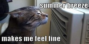 summer breeze  makes me feel fine