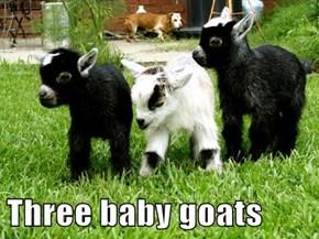 Three baby goats