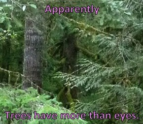 Apparently   Trees have more than eyes.