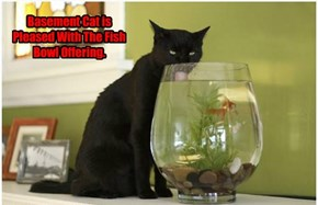 Basement Cat is Pleased With The Fish Bowl Offering.