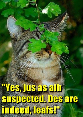 """""""Yes, jus as aih suspected. Des are indeed, leafs!"""""""