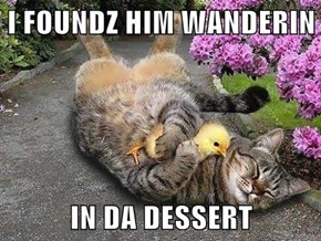 I FOUNDZ HIM WANDERIN  IN DA DESSERT