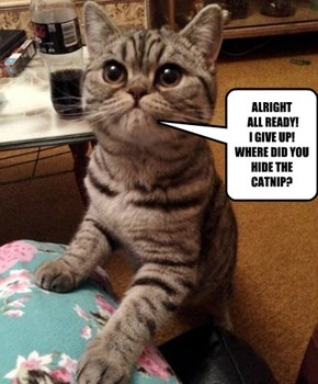 ALRIGHT  ALL READY!   I GIVE UP! WHERE DID YOU HIDE THE CATNIP?