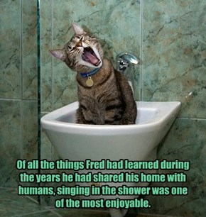 Of all the things Fred had learned during the years he had shared his home with humans, singing in the shower was one  of the most enjoyable.