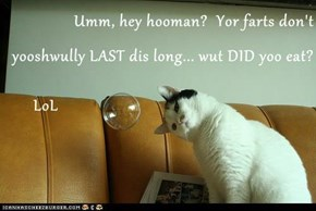 Umm, hey hooman?  Yor farts don't yooshwully LAST dis long... wut DID yoo eat?        LoL