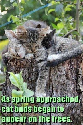 As spring approached, cat buds began to appear on the trees.